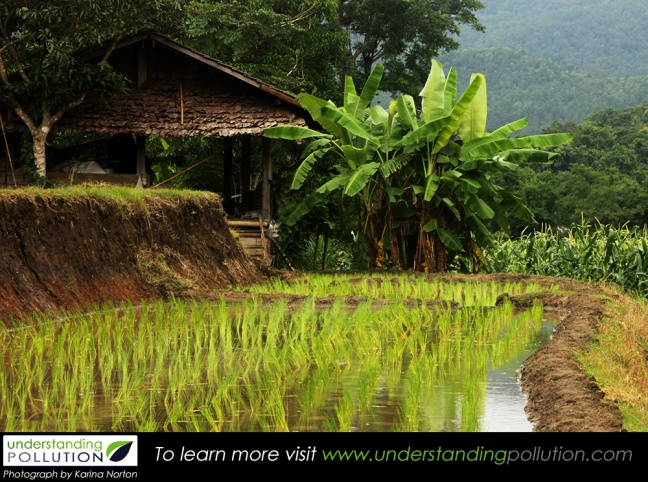 Soil contamination 2